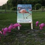 The Flamingo Project - JFAO