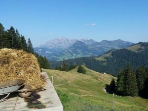 Four Weeks in Goldingen, Switzerland - Courtney Steven